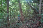 Ao longo do percurso da caminhada você se depara com várias espécies florestais
